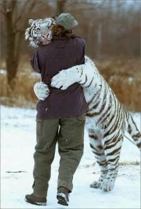 Prietenie intre tigru si om 203x300 Un prieten de nădejde